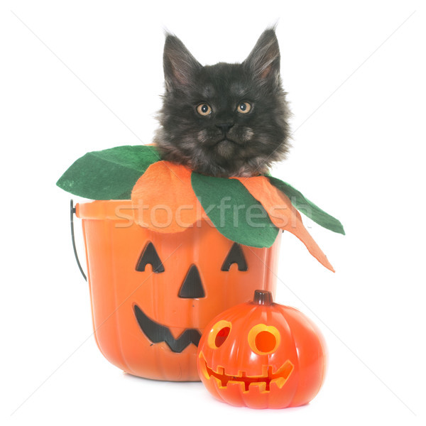 Stockfoto: Kitten · witte · kat · rook · speelgoed · zwarte