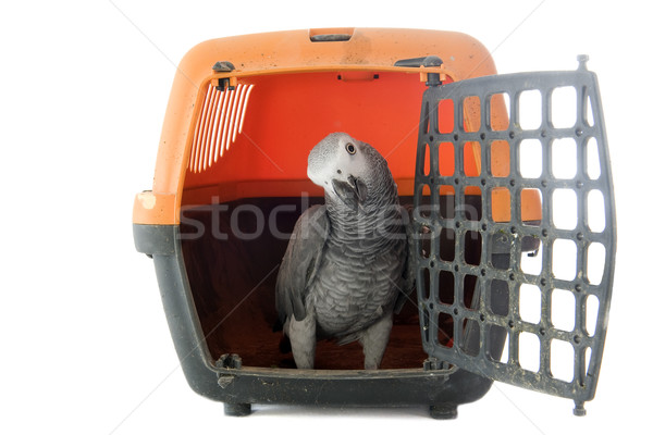 African Grey Parrot in kennel Stock photo © cynoclub