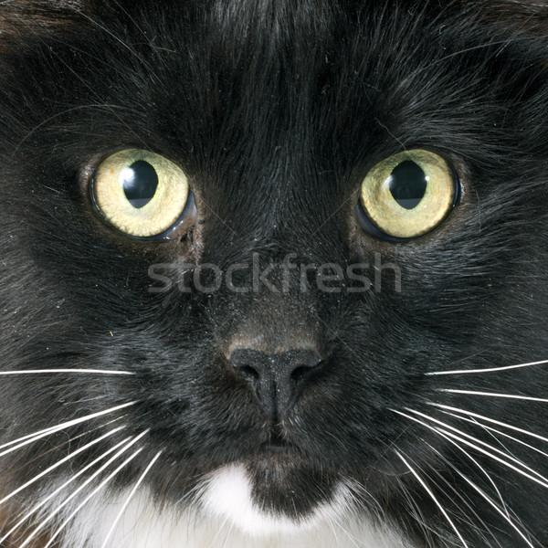 黒猫 白 動物 男性 ペット 孤立した ストックフォト © cynoclub