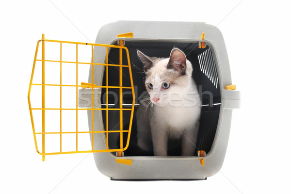 kitten in pet carrier Stock photo © cynoclub