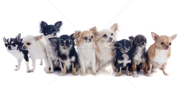 Сток-фото: девять · группа · собаки · молодые · белый · студию