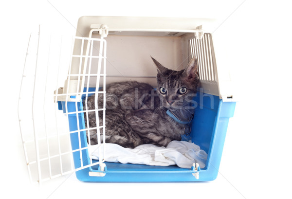 cat in pet carrier Stock photo © cynoclub