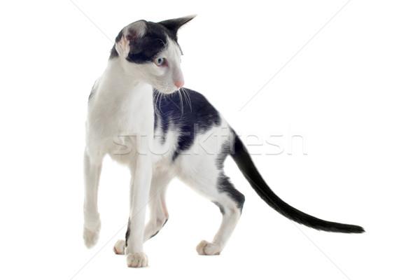 черно белые кошки портрет белый студию Сток-фото © cynoclub