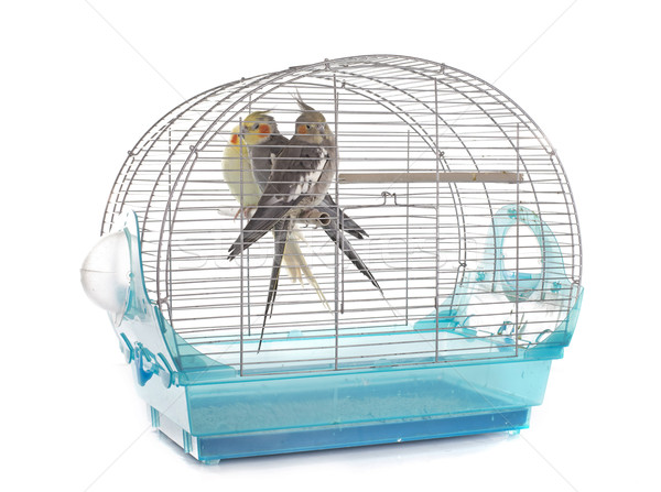 Cage jeunes blanche oiseau groupe Homme Photo stock © cynoclub