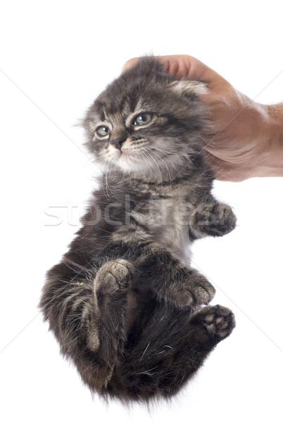 kitten in hand Stock photo © cynoclub