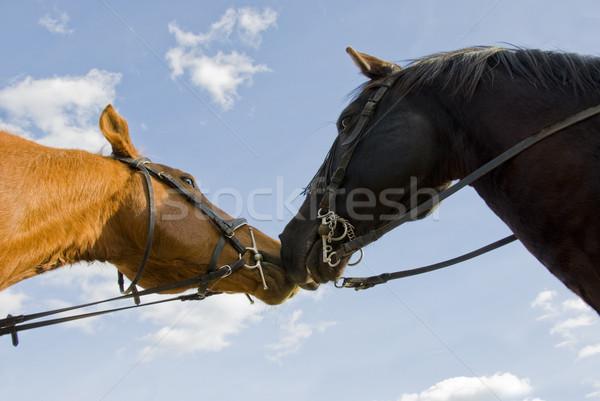 2 友達 馬 美しい 青空 青 ストックフォト © cynoclub