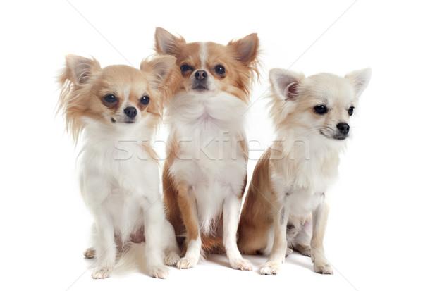 Foto stock: Tres · retrato · cute · perros · jóvenes