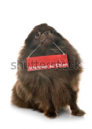 寝 ロットワイラー 肖像 子犬 白 黒 ストックフォト © cynoclub