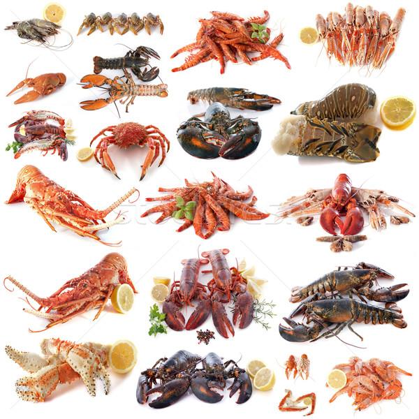 Frutos do mar marisco branco comida grupo alimentação Foto stock © cynoclub