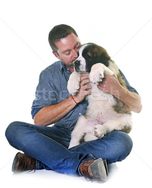 puppy saint bernard and man Stock photo © cynoclub