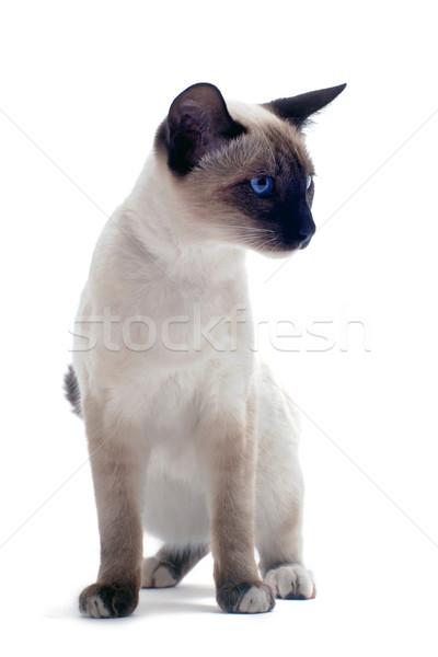 котенка красивой белый кошки голову Сток-фото © cynoclub