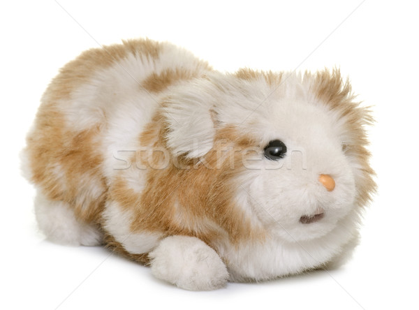 cugdly toy guinea pig Stock photo © cynoclub