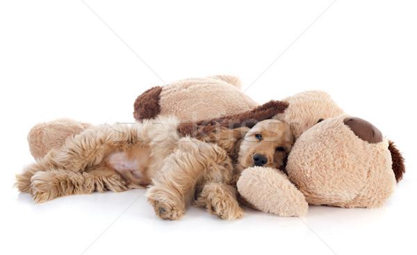 puppy cocker spaniel and toy Stock photo © cynoclub