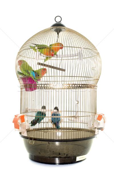 Cage oiseau bleu tropicales animaux studio Photo stock © cynoclub