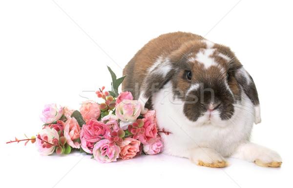 Enano conejo blanco flor vacaciones animales Foto stock © cynoclub