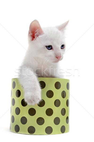 Fehér kiscica doboz fiatal szemek Stock fotó © cynoclub