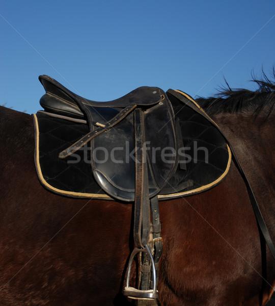 седло фотография черный английский коричневый лошади Сток-фото © cynoclub