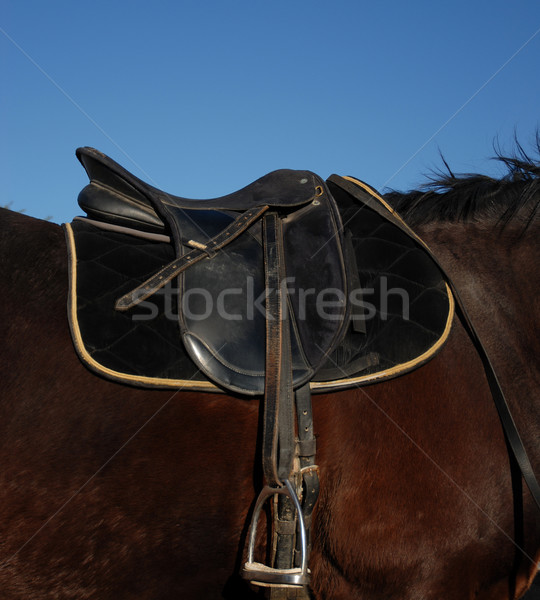 saddle Stock photo © cynoclub