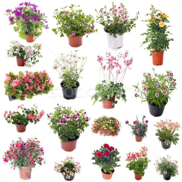 group of flower plants Stock photo © cynoclub