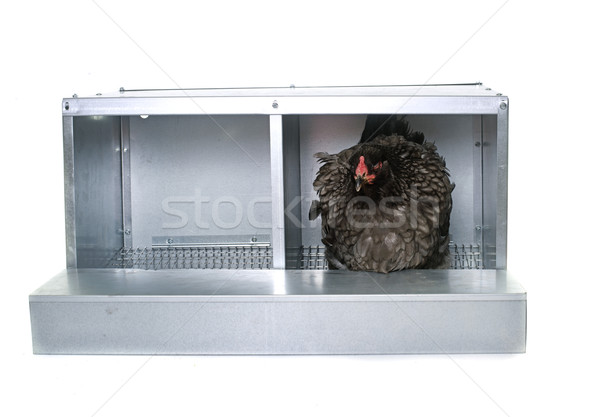 metalic nest box for chicken Stock photo © cynoclub