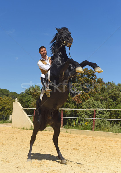 man and rearing stallion Stock photo © cynoclub