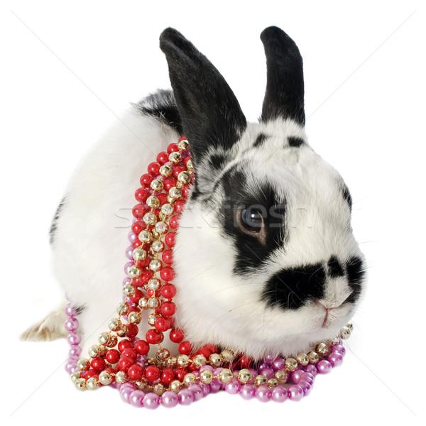 карлик кролик портрет Cute Bunny Pearl Сток-фото © cynoclub