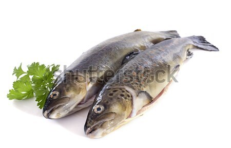 Brown trouts Stock photo © cynoclub