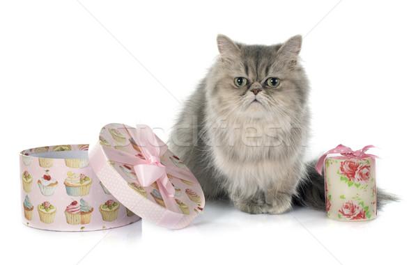 ペルシャ猫 白 猫 ボックス 動物 スタジオ ストックフォト © cynoclub