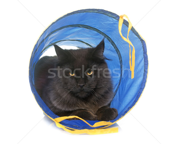 ブラウン メイン州 トンネル 白 猫 動物 ストックフォト © cynoclub