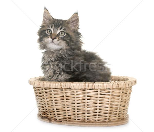 Stock fotó: Maine · kiscica · fehér · macska · kosár · játszik