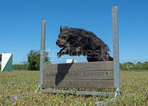 Formazione obbedienza jumping campo recinzione Foto d'archivio © cynoclub
