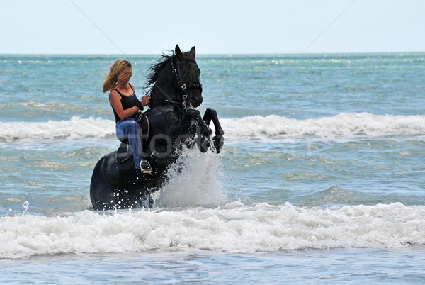 rearing horse in the sea Stock photo © cynoclub