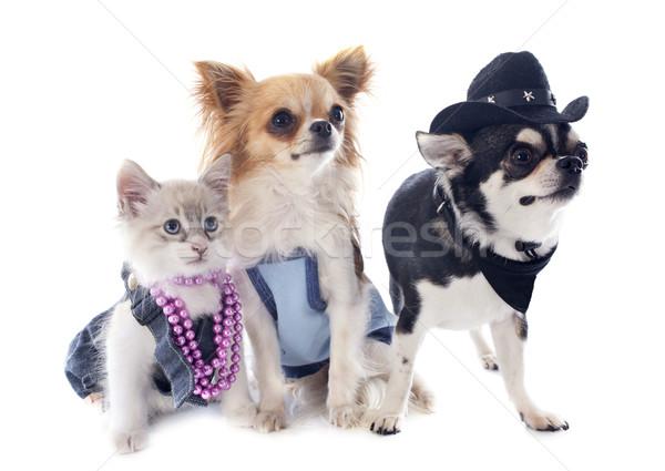 котенка собака глазах кошки собаки щенков Сток-фото © cynoclub