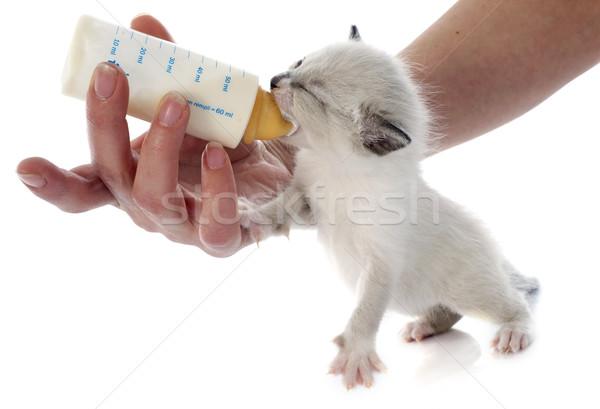 Сток-фото: котенка · белый · стороны · ребенка · бутылку