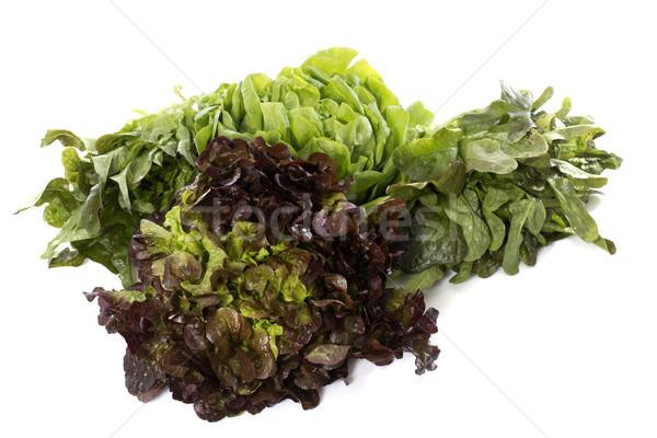 group of salad Stock photo © cynoclub