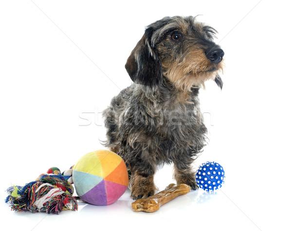Draad speelgoed witte hond bal speelgoed Stockfoto © cynoclub