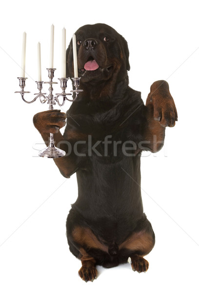 Rottweiler ezüst kutya gyertya ünneplés áll Stock fotó © cynoclub