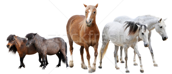 Stock photo: horses and ponies