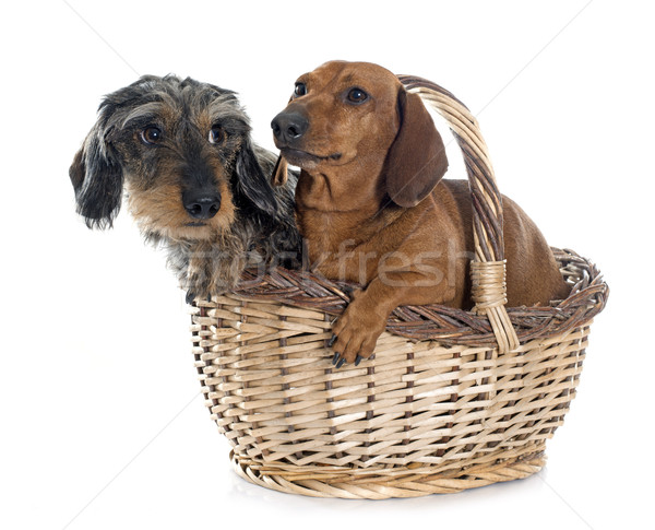 Twee jonge mand hond vrouwelijke studio Stockfoto © cynoclub