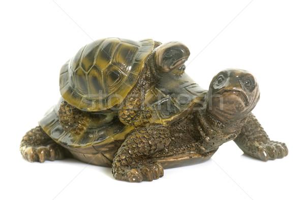 ceramics turtle in studio Stock photo © cynoclub