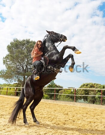 rearing stallion Stock photo © cynoclub