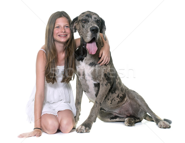 Great Dane and child Stock photo © cynoclub