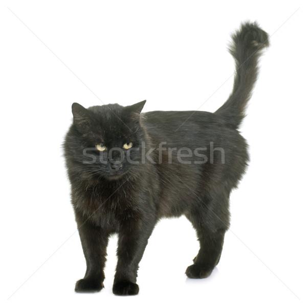 黒猫 スタジオ 白 黒 男性 ストックフォト © cynoclub