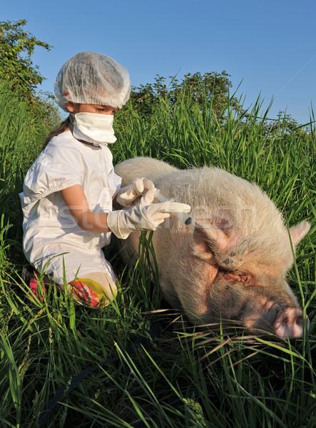 Sertés influenza influenza gyermek játszik disznó Stock fotó © cynoclub