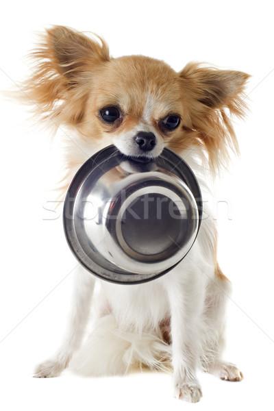 子犬 食品 ボウル 肖像 かわいい ストックフォト © cynoclub