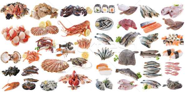 seafood fishs and shellfish Stock photo © cynoclub