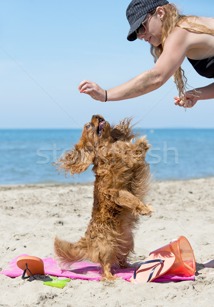 cavalier king charles on the beach Stock photo © cynoclub