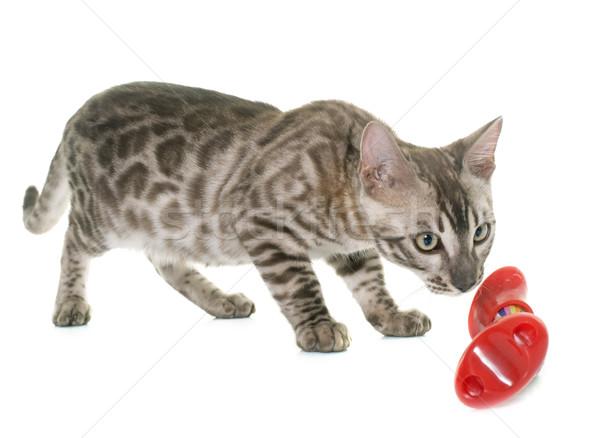 Młodych bengalski kot kotek biały piłka Zdjęcia stock © cynoclub