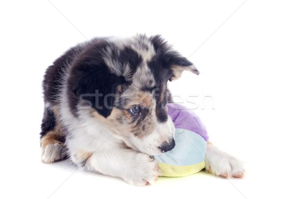Giocare cucciolo border collie ritratto palla bianco Foto d'archivio © cynoclub