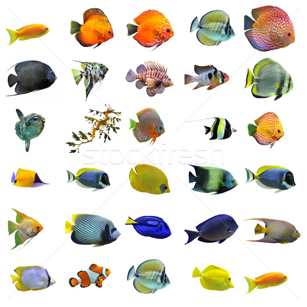fishes Stock photo © cynoclub